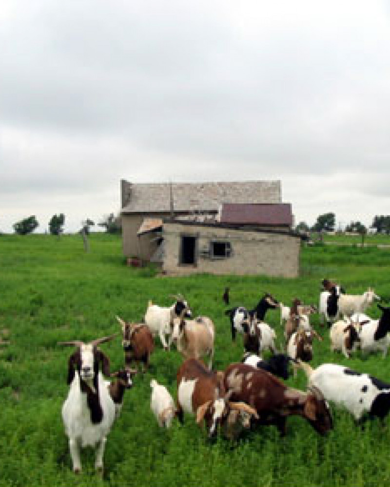The goats charged me, only to be disappointed that I didn't have any food
