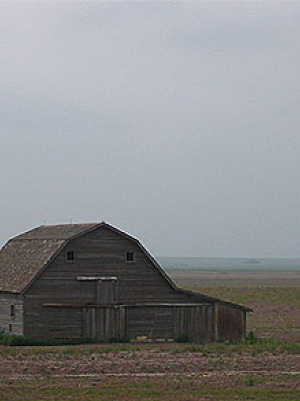 A barn in a wheat field