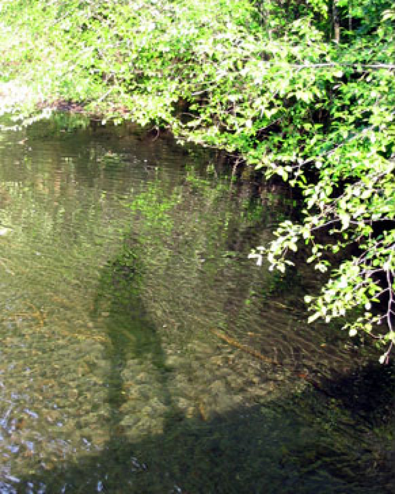 Mickey's shadow in the river