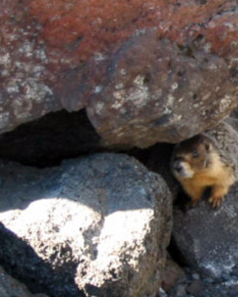 A hungry marmot, or maybe a griffin