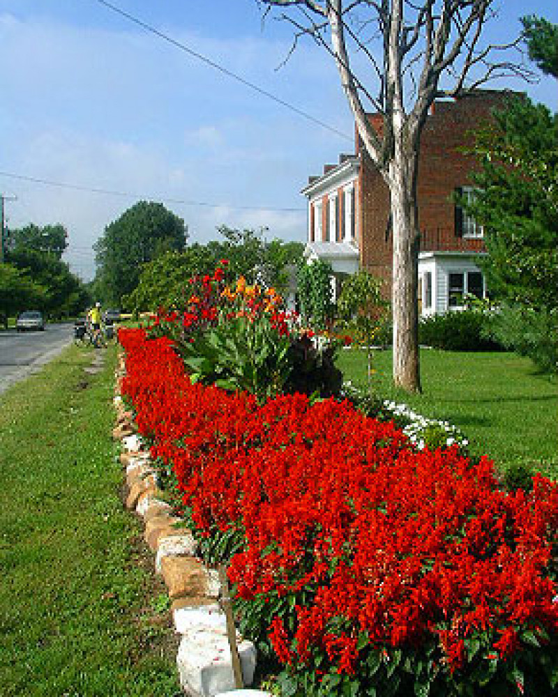 A row of flowers in Buchanan