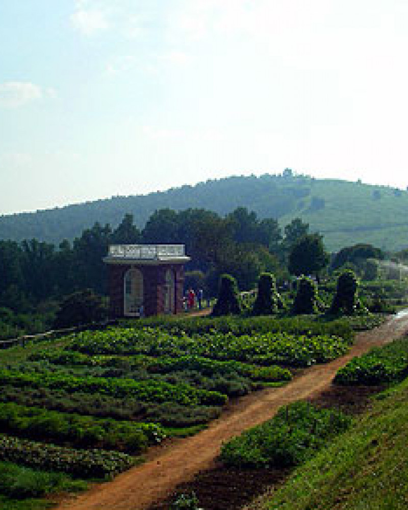 Jefferson's garden at Monticello