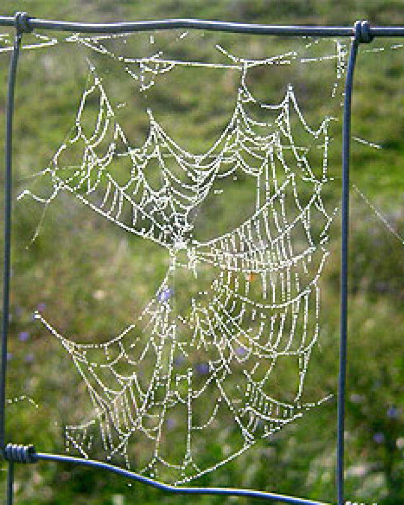 A spider web in Breaks Interstate Park